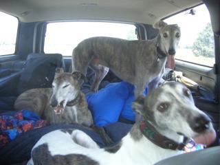 the passengers