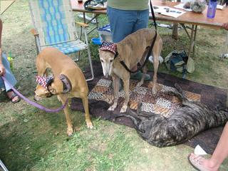 partiotic hounds