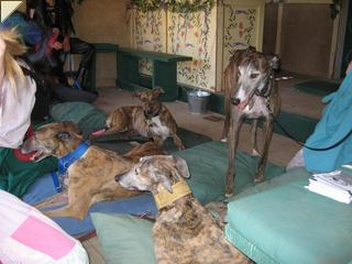Collection of brindle hounds
