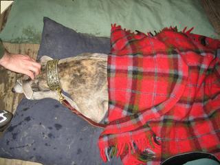 Merlin in a blanket