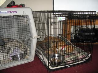 Sierra and nash in crates