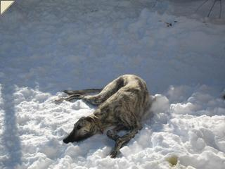 Nash laying in the snow