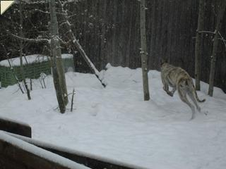 Snow zoomies